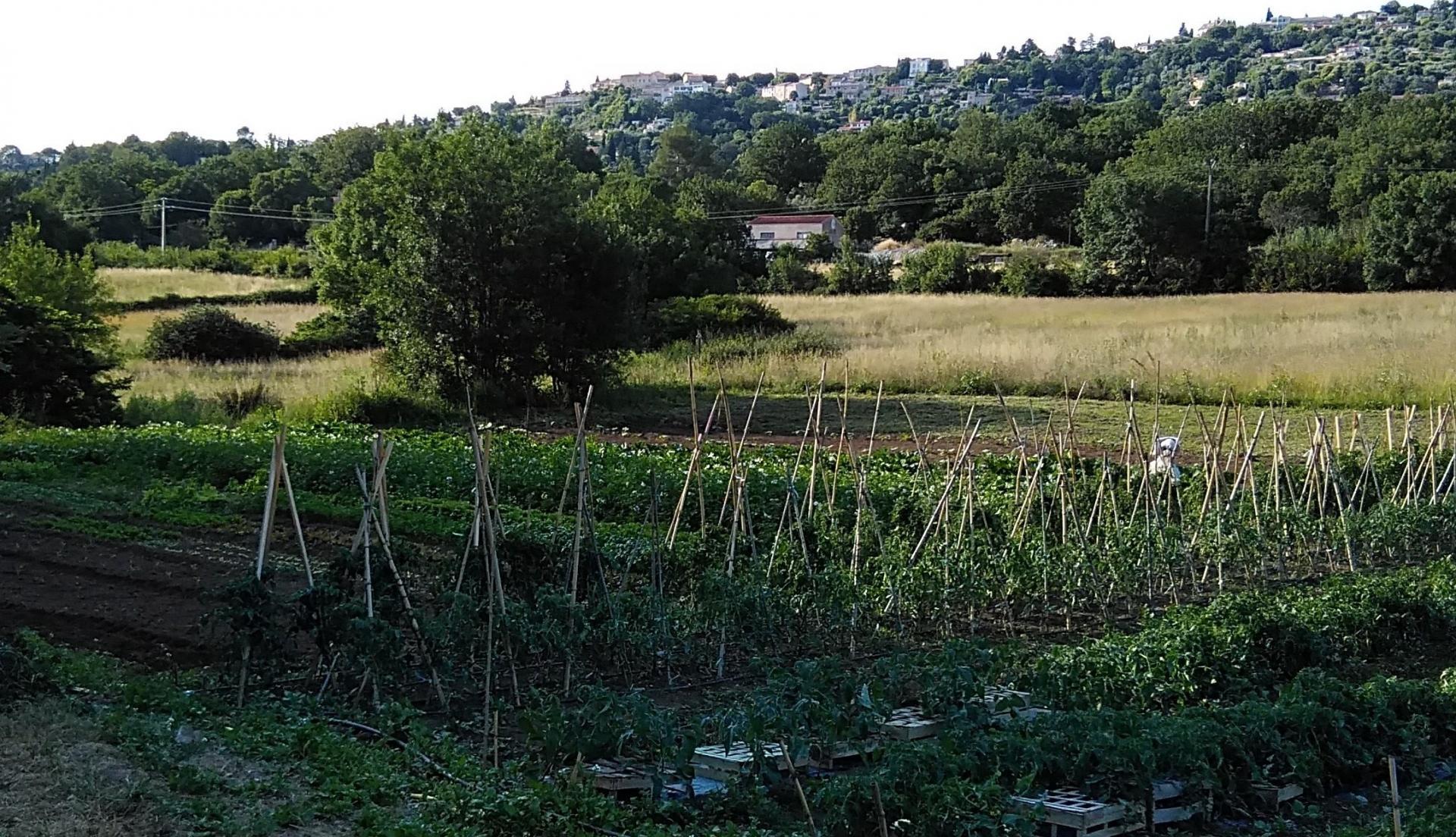 Le jardin de legumes 2